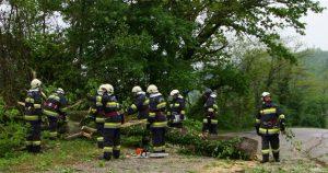 Rušenje stabala uz Ž2155 u Krapinskim Toplicama